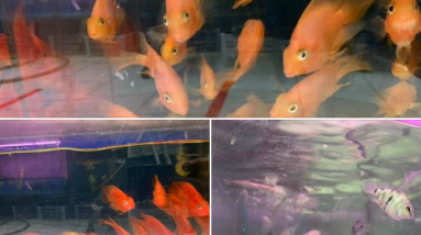Pet Fish Shop Bangkit Road